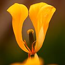 Undressed Tulip by Brian Dodd