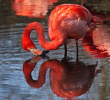pink flamingo by Marco7r7