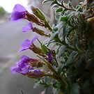 wall flowers 1 by armadillozenith