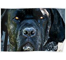 Old Black Dog Poster