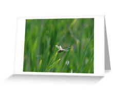 051509-19   DRAGONFLY  V Greeting Card