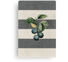 botanical stripes - plums Canvas Print