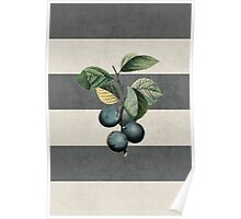 botanical stripes - plums Poster
