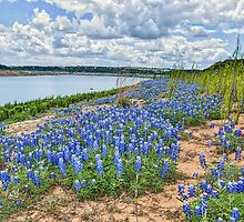 Bluebonnets on the River Edge by Tod and Cynthia Grubbs