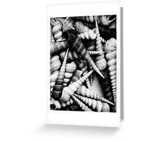 Shells Greeting Card