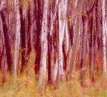 Birch Grove by sundawg7