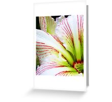 Sweetness of the Petals Greeting Card