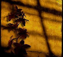 Shadow on the Wall by Lydia Marano