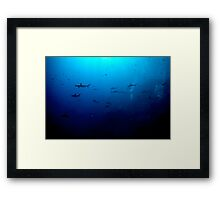 Blacktip & Whitetip Reef Sharks Framed Print