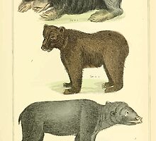 The Animal Kingdom by Georges Cuvier, PA Latreille, and Henry McMurtrie 1834 585 - Mammalia Mammals by wetdryvac