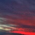 Flying Home on Ripples of Red by Larry Lingard-Davis