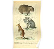 The Animal Kingdom by Georges Cuvier, PA Latreille, and Henry McMurtrie 1834 599 - Mammalia Mammals Poster