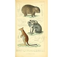 The Animal Kingdom by Georges Cuvier, PA Latreille, and Henry McMurtrie 1834 599 - Mammalia Mammals Photographic Print