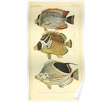 The Animal Kingdom by Georges Cuvier, PA Latreille, and Henry McMurtrie 1834  108 - Pisces Fish Poster