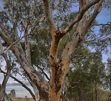The Art of a Gum Tree by Larry Lingard-Davis