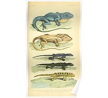 The Animal Kingdom by Georges Cuvier, PA Latreille, and Henry McMurtrie 1834 601 - Reptilia Reptiles Poster