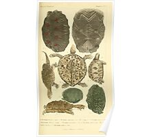 The Animal Kingdom by Georges Cuvier, PA Latreille, and Henry McMurtrie 1834  005 - Reptilia Reptiles Poster