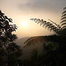 Furn Tree Yang Ming National Park by Digby