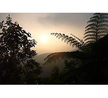 Furn Tree Yang Ming National Park Photographic Print