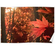 Autumn leaves in the fading light Poster