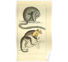 The Animal Kingdom by Georges Cuvier, PA Latreille, and Henry McMurtrie 1834 574 - Mammalia Mammals Poster