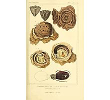 The Animal Kingdom by Georges Cuvier, PA Latreille, and Henry McMurtrie 1834  265 - Mollusca Mollusks Photographic Print