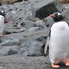 Penguin Friendship by Jotman