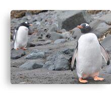 Penguin Friendship Metal Print