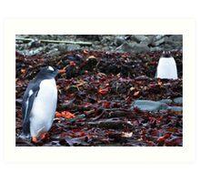 Penguin Friendship Art Print