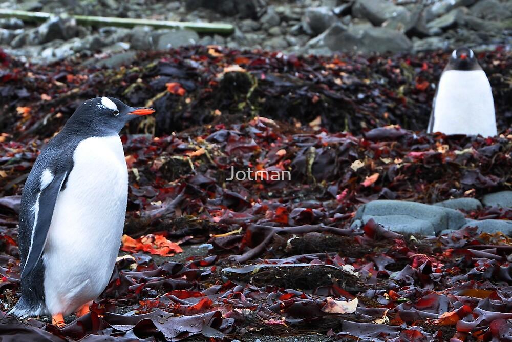 Penguin Friendship by Jotman