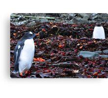 Penguin Friendship Canvas Print