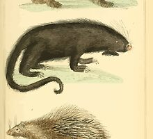 The Animal Kingdom by Georges Cuvier, PA Latreille, and Henry McMurtrie 1834 608 - Mammalia Mammals by wetdryvac