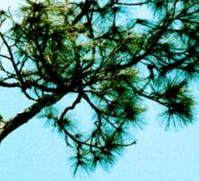 Pine in the Sky Sticker