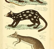 The Animal Kingdom by Georges Cuvier, PA Latreille, and Henry McMurtrie 1834 598 - Mammalia Mammals by wetdryvac