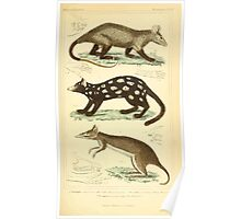 The Animal Kingdom by Georges Cuvier, PA Latreille, and Henry McMurtrie 1834 598 - Mammalia Mammals Poster