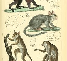 The Animal Kingdom by Georges Cuvier, PA Latreille, and Henry McMurtrie 1834 580 - Mammalia Mammals by wetdryvac