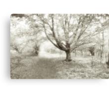 An Ageless Place Canvas Print