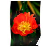 The Cactus Flower Poster