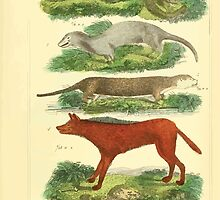 The Animal Kingdom by Georges Cuvier, PA Latreille, and Henry McMurtrie 1834 581 - Mammalia Mammals by wetdryvac