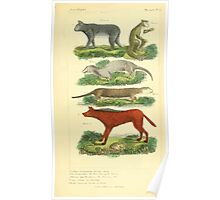 The Animal Kingdom by Georges Cuvier, PA Latreille, and Henry McMurtrie 1834 581 - Mammalia Mammals Poster