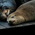 Sea Lions by Kimberly Palmer