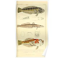 The Animal Kingdom by Georges Cuvier, PA Latreille, and Henry McMurtrie 1834  071 - Pisces Fish Poster