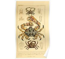 The Animal Kingdom by Georges Cuvier, PA Latreille, and Henry McMurtrie 1834 601 - Crustacae, Crustaceans Poster