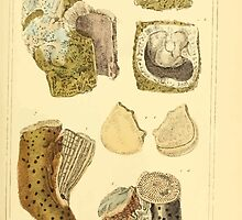 The Animal Kingdom by Georges Cuvier, PA Latreille, and Henry McMurtrie 1834  263 - Mollusca Mollusks by wetdryvac