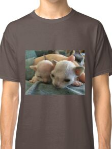 Tiny Sphynx and Rex Kittens Classic T-Shirt