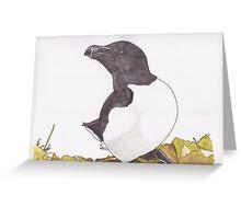 Atlantic Razorbill Greeting Card