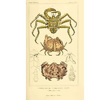 The Animal Kingdom by Georges Cuvier, PA Latreille, and Henry McMurtrie 1834  325 - Crustacea Crustaeans Photographic Print