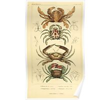 The Animal Kingdom by Georges Cuvier, PA Latreille, and Henry McMurtrie 1834  301 - Crustacea Crustaeans Poster