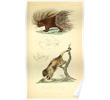 The Animal Kingdom by Georges Cuvier, PA Latreille, and Henry McMurtrie 1834 609 - Mammalia Mammals Poster