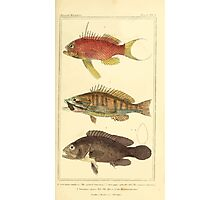 The Animal Kingdom by Georges Cuvier, PA Latreille, and Henry McMurtrie 1834  049 - Pisces Fish Photographic Print